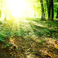 Paquelet Falk Funeral Home Obituaries Image - Sun Shining in the Woods